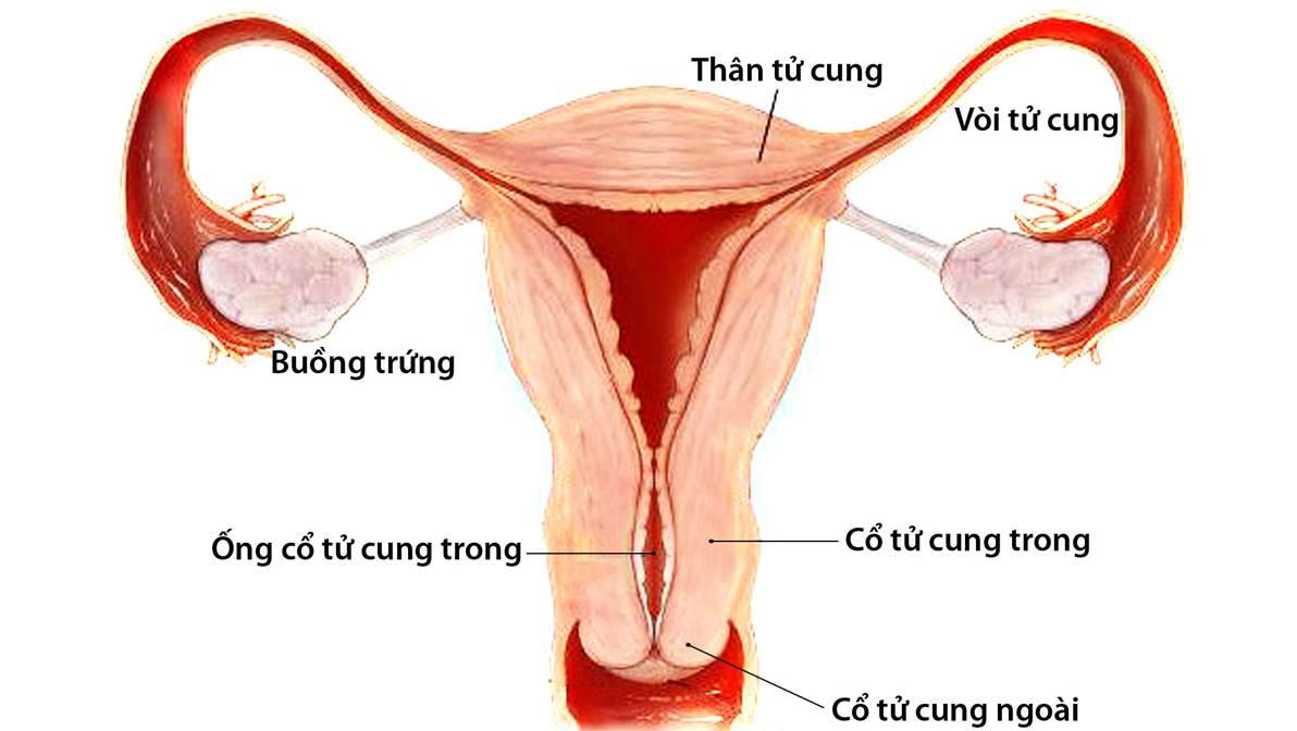 Tầm soát ung thư cổ tử cung tại Nghệ An